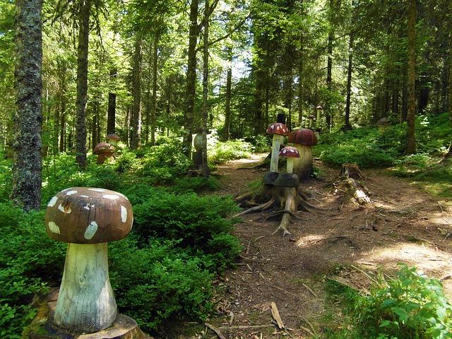 Free mushroom forest mushrooms wood fairy tale forest