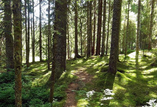 Free nature moor forest away hiking black forest path