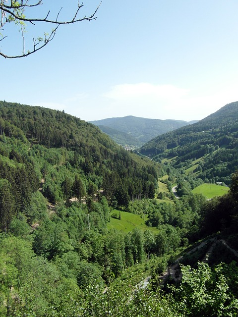 Free black forest valley outlook view landscape nature