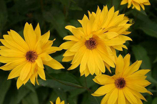 Free flowers floral nature beautiful closeup yellow
