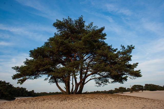 Free soester dunes dunes tree nature landscape sand