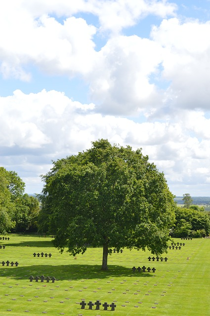 Free tree cemetery normandy sun green sky cloud lawn