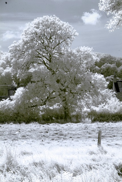 Free infrared tree landscape sky surreal white nature