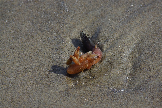 Free barnacle animal sea creature sea underwater marine