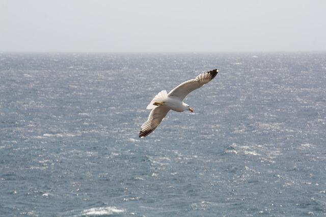 Free seagull sea bird water sky fly water bird animal