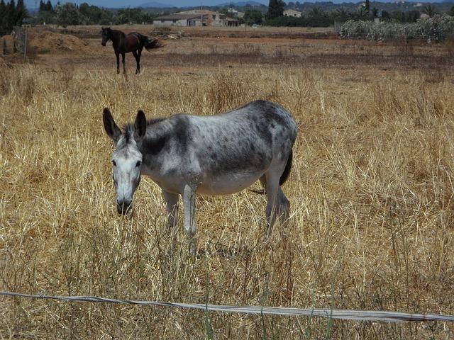 Free mule horse muli animal husbandry farm pasture