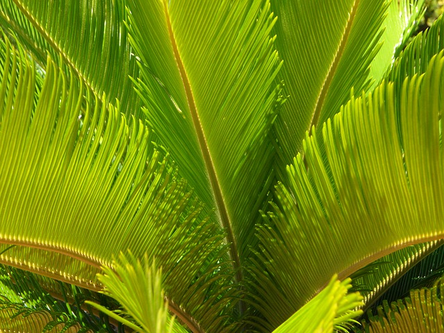 Free palm leaves palm fronds close structure palm green