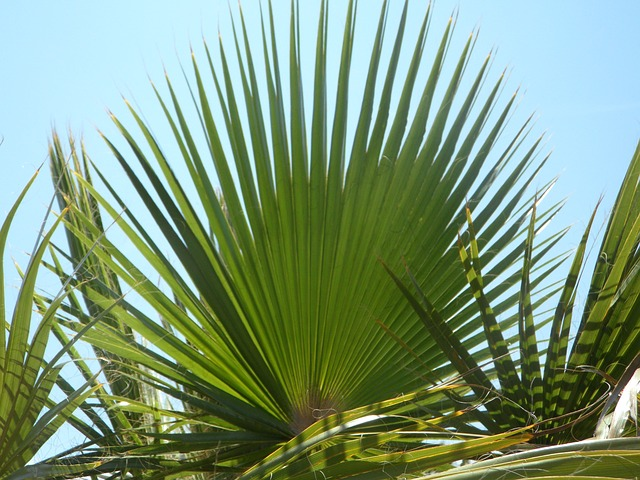 Free fan palm palm leaf green structure sky palm fronds