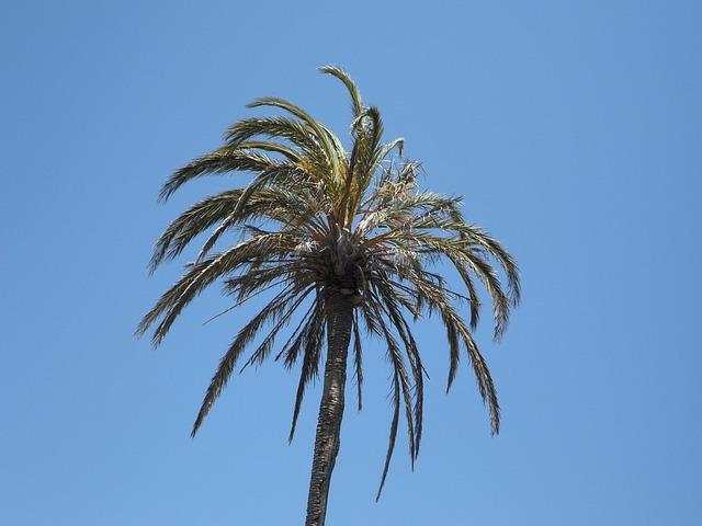 Free palm sky high tropical tropics mediterranean