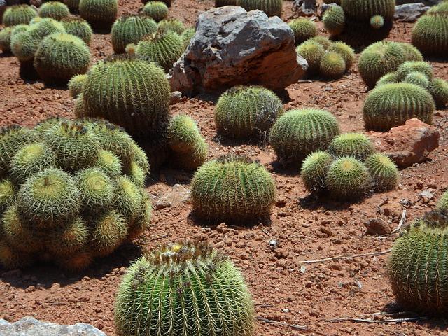 Free cactus ball cactus plant cactus garden prickly