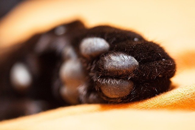 Free cat cat's paw paw print paws velvet paw fur pet