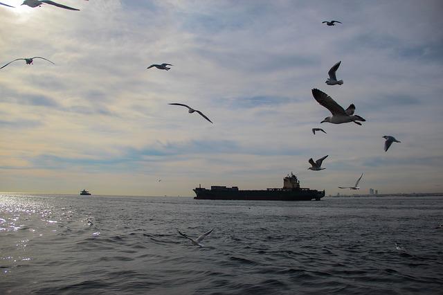 Free sea ocean seagulls ship water ships seagull
