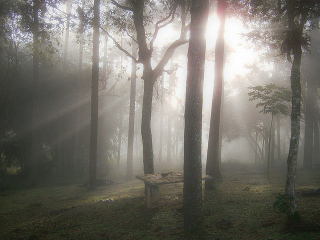 Free woods dawn ray of light winter winter scene