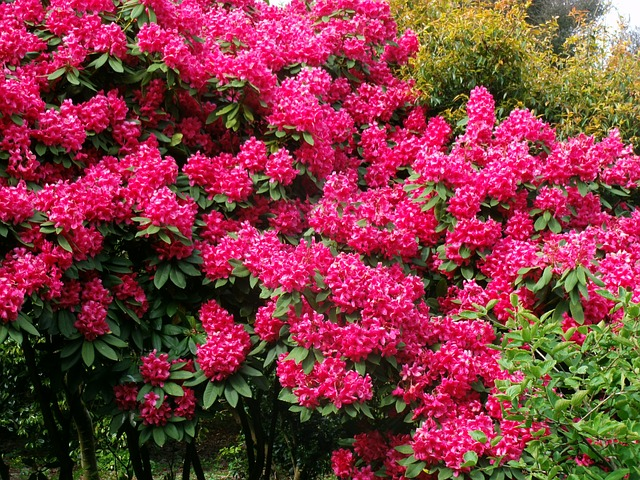 Free bush flowers garden spring plant flora nature