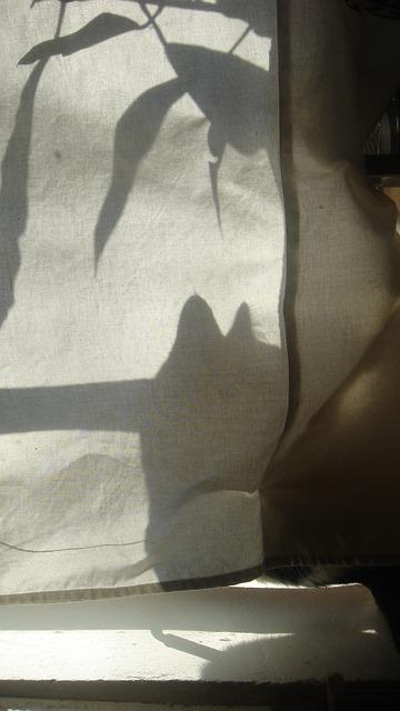 Free shadow sun cat light