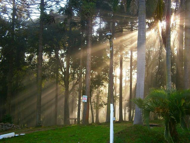 Free morning light trees