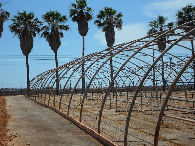 Free palm trees old greenhouses greenhouses old empty