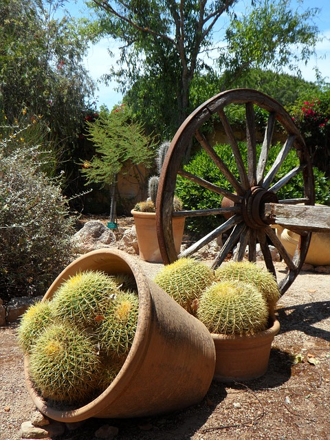Free garden cactus picturesque wooden wheel wagon wheel