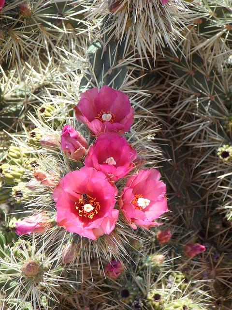 Free cactus prickly spur plant flora cactus greenhouse