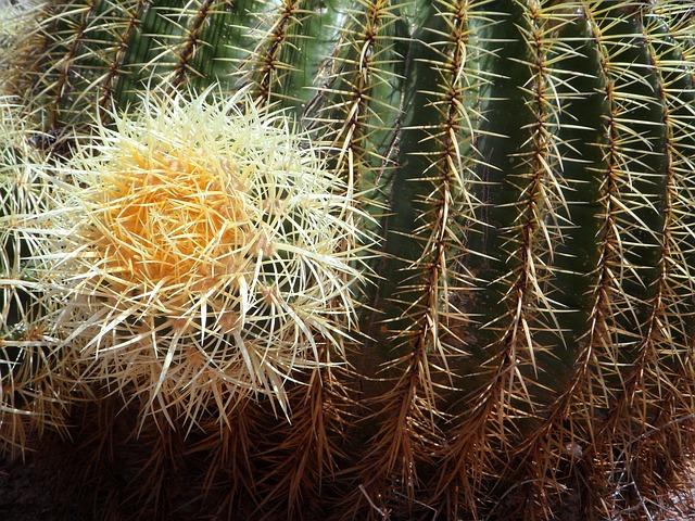Free cactus ball cactus close thorns spur green