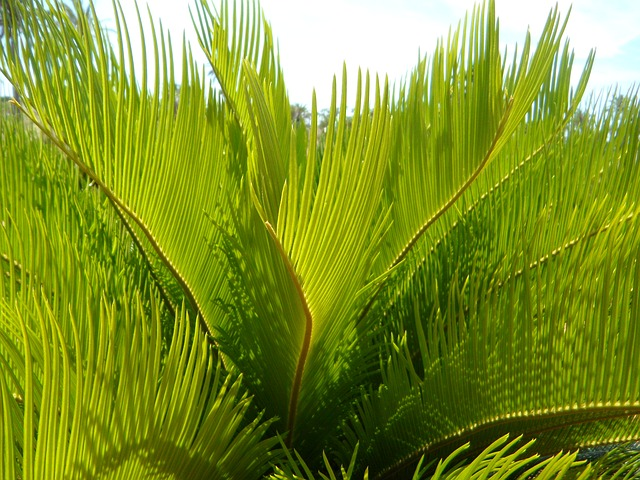 Free palm fronds detail close structure texture green