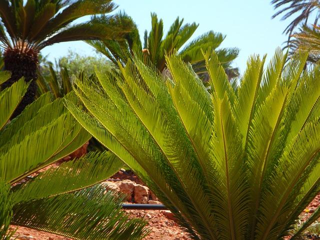 Free palm fern green lush ornamental plant decorative