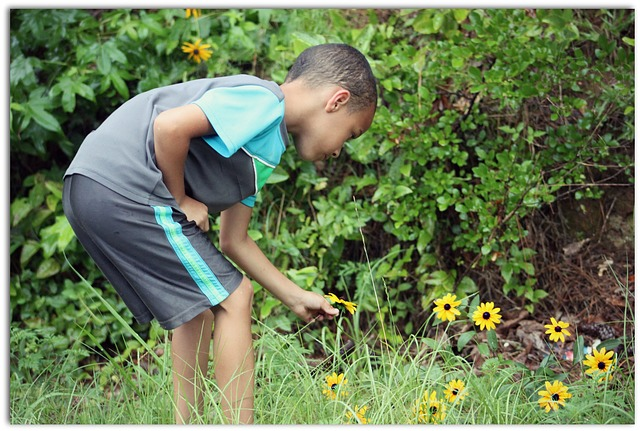 Free young boy picking daisy happy child childhood