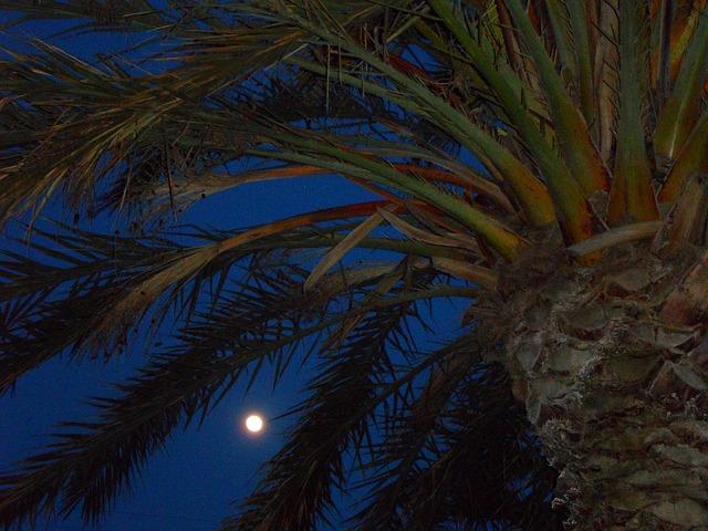 Free evening night abendstimmung moon full moon light