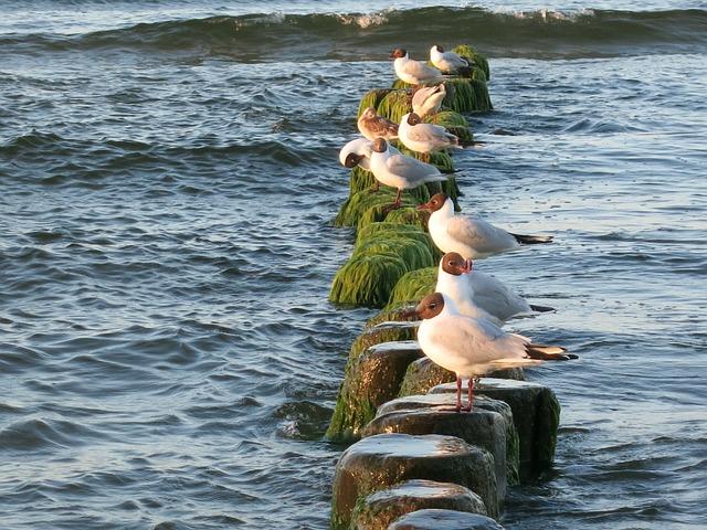 Free seagull baltic sea usedom sea