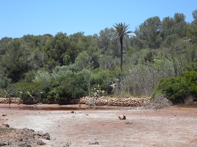 Free river riverbed dehydrated mediterranean flora