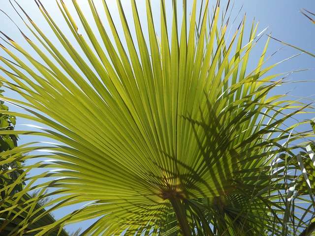 Free fan palm light and shadow structure sky sun