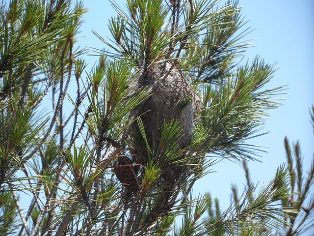 Free caterpillar plague crawler's nest pine