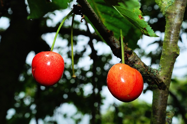 Free cherry cherries summer fruit red sweet delicious