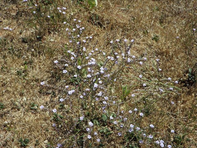 Free cakile maritima dune vegetation dune plant plant