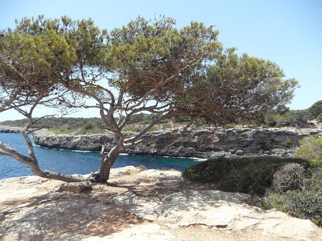 Free mediterranean sea coast rocky coast rocky mallorca