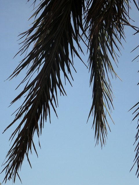 Free palm fronds palm sky detail silhouette leaves