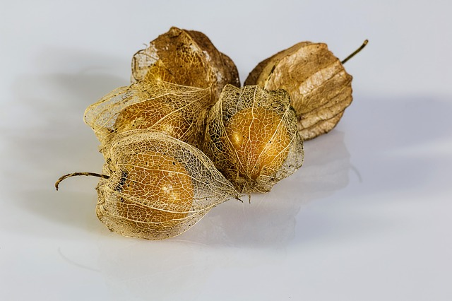 Free physalis alkekengi bladder cherry chinese lantern