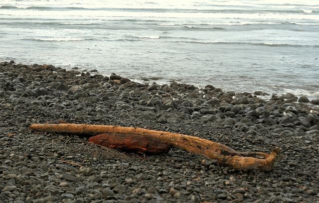 Free seaside oregon driftwood shore nature outdoor