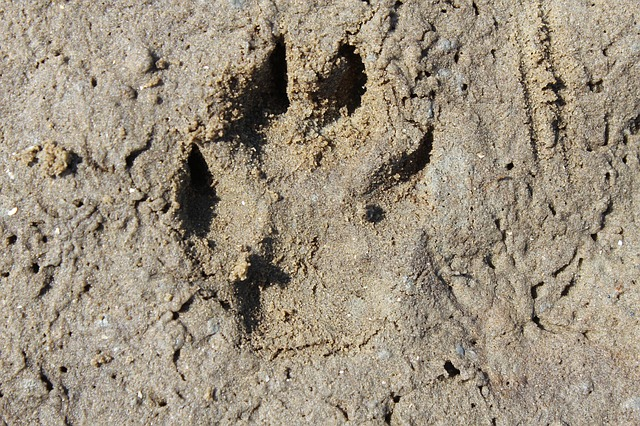 Free trace footprint dog track dog tracks