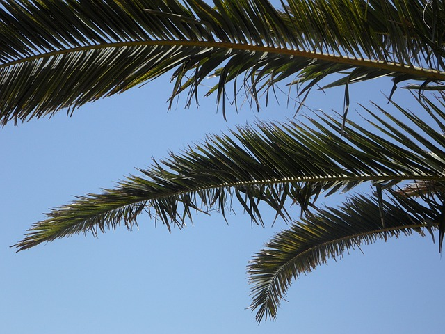 Free palm sky palm leaves view outlook holiday