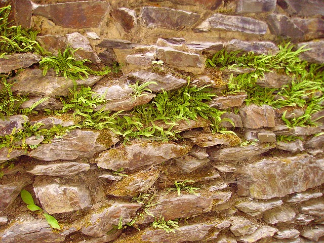 Free ferns fouling stone wall old wall stones nature
