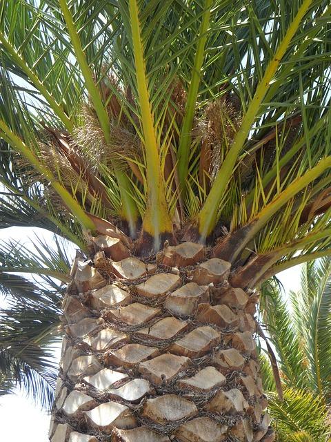 Free palm detail tree plant log