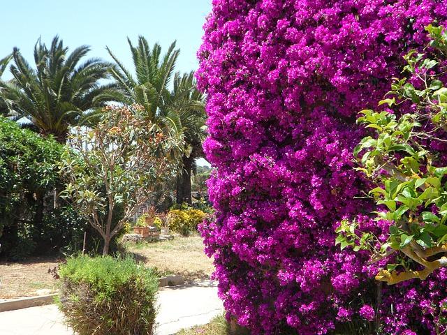 Free mediterranean garden summer flora plant flower