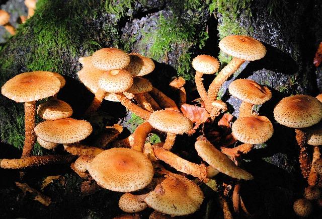 Free fungi woodland fungus toadstool decay flora