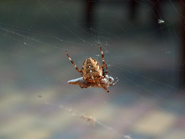 Free spider nature cobweb insect network arachnid pets