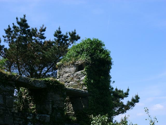 Free castle wall overgrown ruin