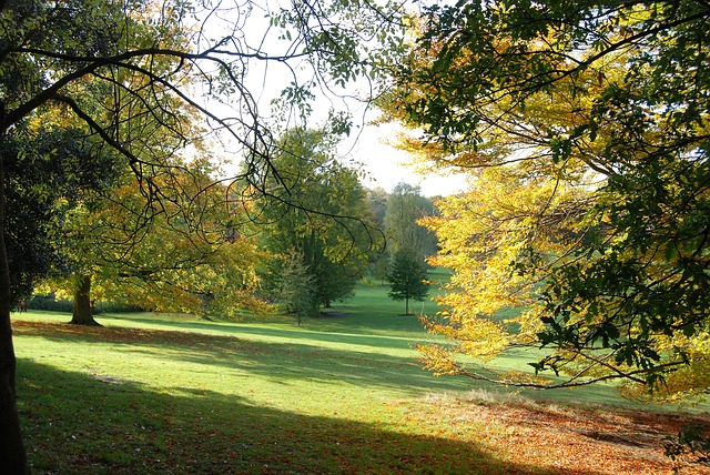 Free autumn trees fall landscape environment woods