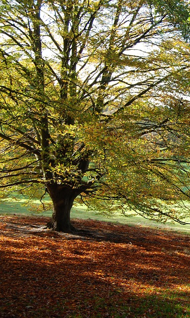 Free tree autumn fall foliage color brown outdoors