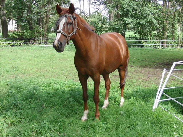 Free horse nature animal