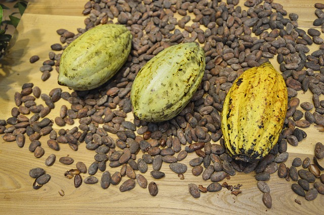 Free cocoa beans cocoa display chocolate ingredients
